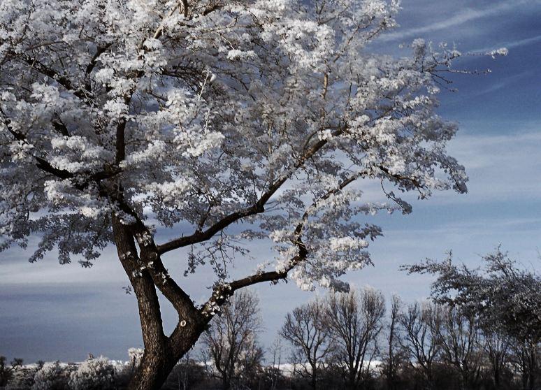 White Tree No 3186